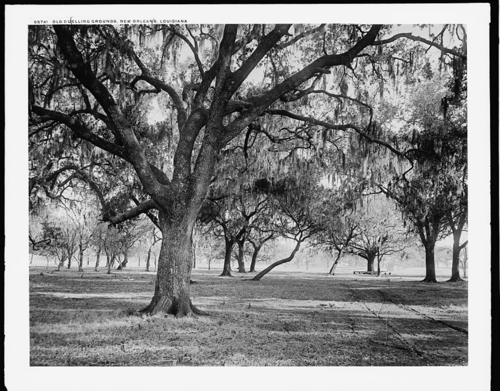 The Dueling Oaks, 1900.